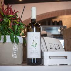 Sauvignon Blanc Lutea Convivio Ristotigelleria Toscana Vetrinando Arezzo
