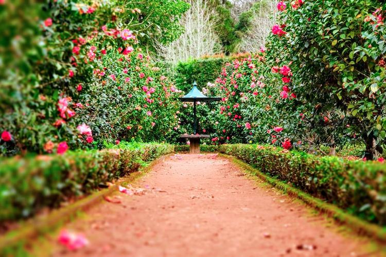 giorgini fiori e piante allestimenti giardini vetrinando arezzo