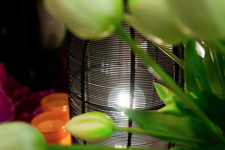 giorgini fiori e piante illuminazione vetrinando arezzo