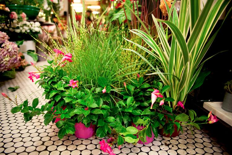 giorgini fiori e piante piante da esterno e interno vetrinando arezzo