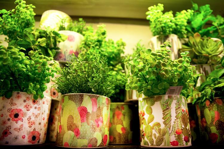giorgini fiori e piante vasi vetrinando arezzo