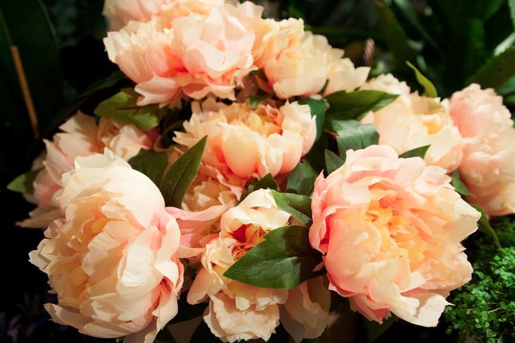 giorgini fiori e piante fiori e piante artificiali vetrinando arezzo